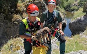 Heroico rescate del Greim de Sabero de tres cachorros de mastín en un canal de León
