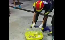 Los bomberos recuperan una culebra de escalera junto al surtidor de una gasolinera en Valladolid
