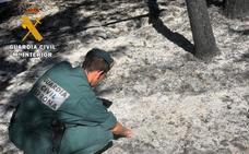 El contacto de ramas con tendido eléctrico, posible causa del fuego de Gavilanes