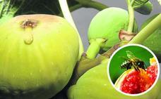 El sorprendente caso (resuelto en Valladolid) del paciente que sufrió alergia al veneno de avispa sin que le hubiera picado