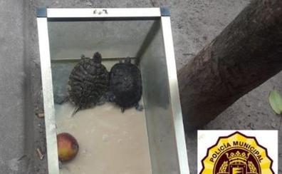 La Policía de Valladolid encuentra una pecera con tres tortugas abandonadas