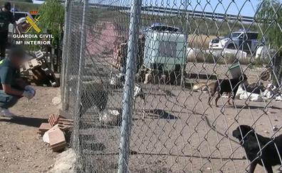 Detenido un criador de perros en Burgos por maltrato animal