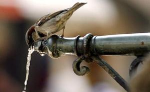 SEO/Birdlife advierte de que España será el desierto de Europa