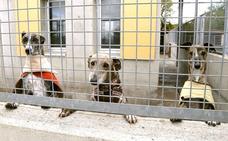 El abandono de perros no es un problema exclusivo del verano en Palencia