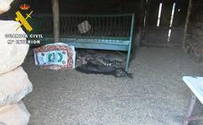Investigado por dejar morir a más de cuarenta animales en Ávila