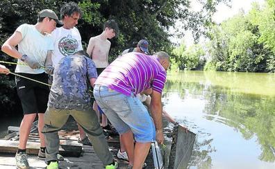 El Ayuntamiento de Palencia exige a la CHD la limpieza del Carrión y del Canal de Castilla