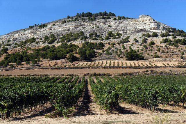 Los viticultores de Castilla y León suman derechos para plantar otras 708 hectáreas de viñedo
