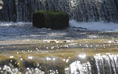El Esgueva, con un caudal bajo mínimos, continúa arrastrando peces muertos a su paso por Valladolid