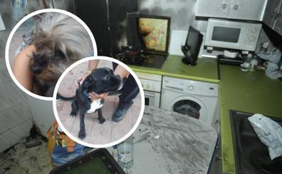 Rescatados dos perros en el incendio de una vivienda en el barrio de Delicias de Valladolid