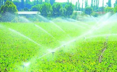 Los productores auguran una buena campaña de remolacha con más de 100 toneladas por hectárea