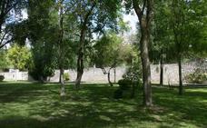 El Ayuntamiento de Cuéllar tala árboles en mal estado y prohíbe el uso del glifosato