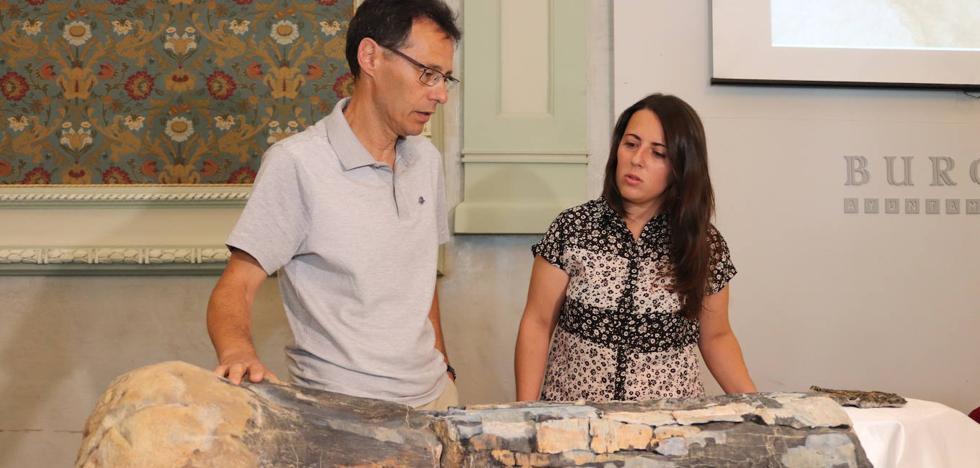 La tercera campaña de excavación de Torrelara revela la existencia de varios grupos de dinosaurios