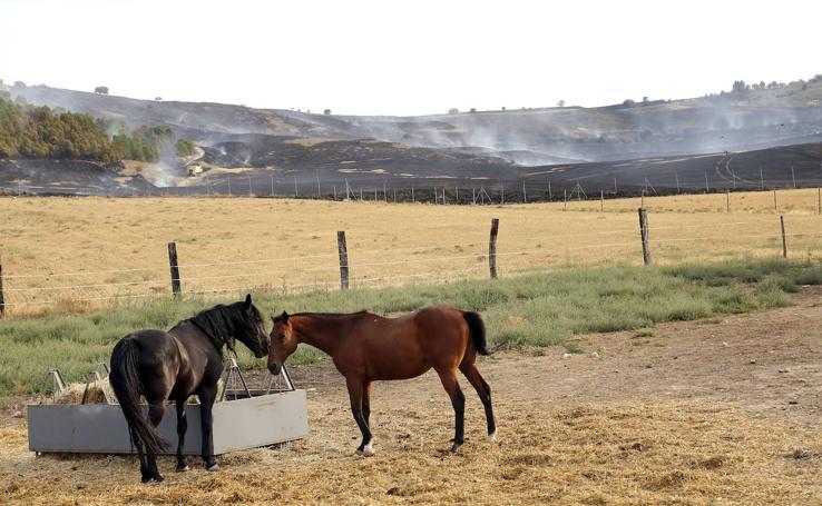 Un incendio quema 70 hectáreas en el Monte el Viejo de Palencia