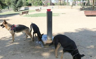 Llevar a un perro sin correa en Valladolid puede costar a su dueño entre 150 y 600 euros
