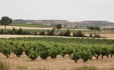 La OIVE pide que unos requisitos mínimos de calidad para la uva y los vinos sin DOP ni IGP
