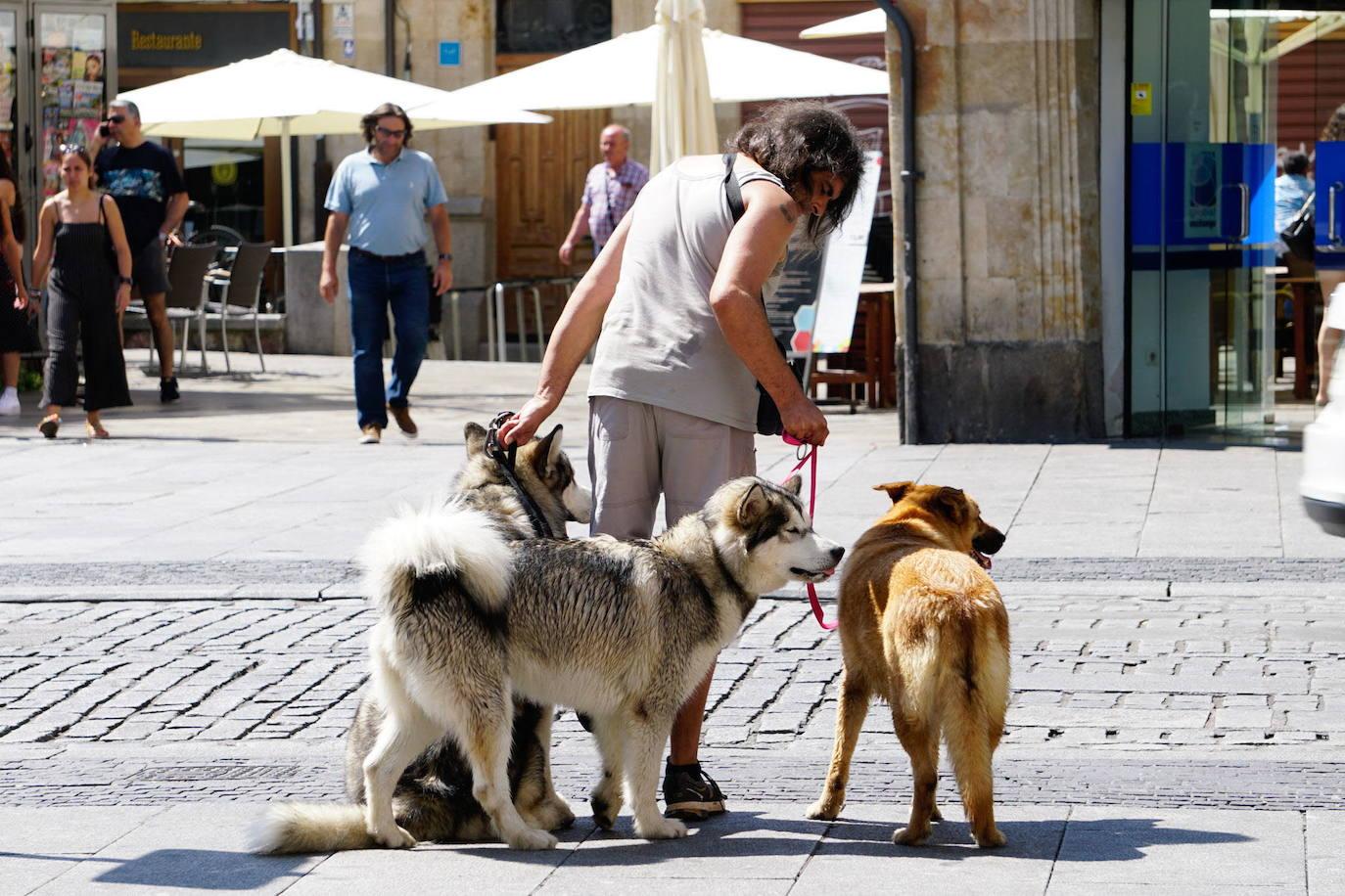 Libre elección de perro