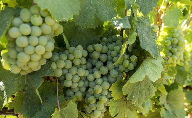 Aumentan las ventas de vinos de Ribera y de Rueda el 16% hasta julio