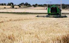 La sequía y el pedrisco han dejado 55.740 hectáreas declaradas siniestro en Soria