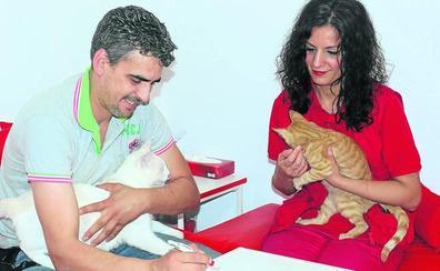 Una voluntaria impulsa un albergue para gatos en su tienda de La Victoria