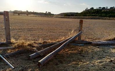 Derriban la valla de una finca y sueltan de forma «intencionada» a nueve vacas entre Fuensaldaña y Mucientes