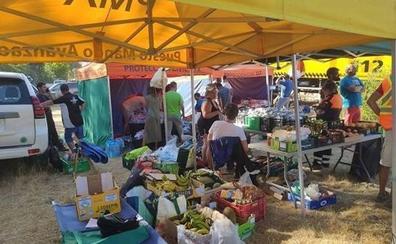 La cifra de voluntarios para limpiar la sierra de Guadarrama supera ya el medio millar