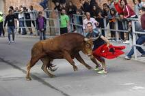 Multitudinario encierro y toro del cajón en las fiestas de Campaspero