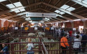 La Diputación defiende que «ha actuado de la misma manera» con el Mercado de Ganado durante los últimos diez años