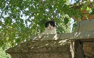 El Consistorio creará areneros, gateras y bebederos para los gatos del cementerio