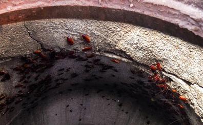 Estas son las recomendaciones para evitar la proliferación de ratas y plagas
