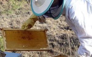 Unión de Campesinos de Segovia denuncia la falta de control en el sector apícola