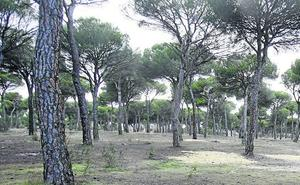 La Junta convoca ayudas para la reforestación por 16,5 millones