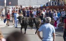 Tudela de Duero vibra con las vistosas sueltas de los primeros Toros del Alba