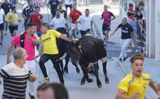 El segundo encierro de las fiestas de Peñafiel discurre sin incidentes