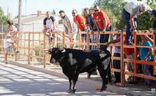 Encierro urbano de Cantalpino