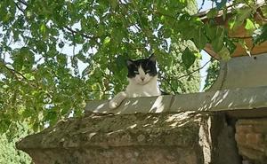 Zamora controlará las colonias de gatos callejeros tras aparecer ejemparles muertos con signos de maltrato