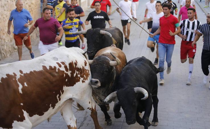 Encierro y capea matutina del sábado en Peñafiel