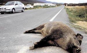 Tres colisiones contra dos jabalíes y un corzo esta madrugada en Valladolid