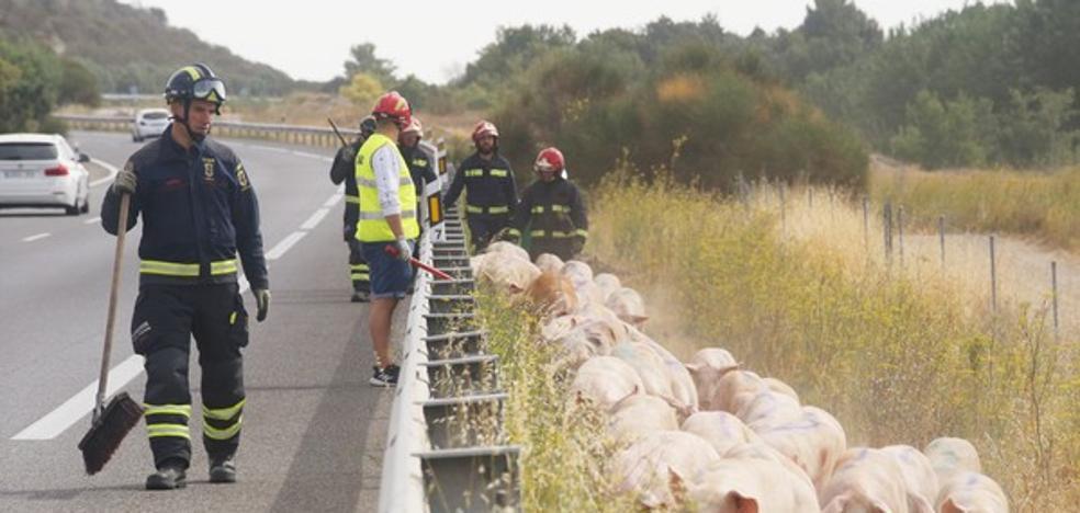 Reestablecido el tráfico en la A-62 tras la colisión entre un camión de cerdos y un autobús en Cordovilla
