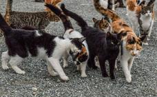 El plan de control de colonias felinas llega a 34 municipios vallisoletanos en dos años