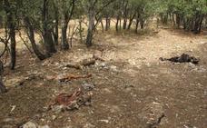 La Guardia Civil de Soria localiza 83 cadáveres de ganado ovino y caprino