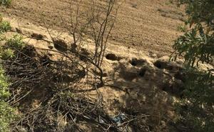 Los agricultores denuncian «plaga» de conejos en Valladolid, Palencia, Segovia y Burgos