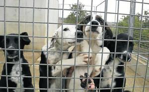 La Policía Local de Palencia pide que se inste a Scooby a recoger perros o se rescinda su contrato