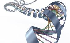 No existe un «gen gay», confirma un gigantesco estudio de ADN