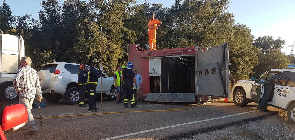 Un novillo del camión volcado en Palencia embiste a un bombero que trabajaba en el accidente