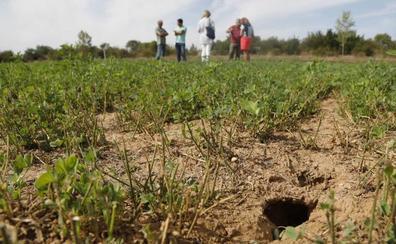 Los casos de tularemia se elevan a 34 en Palencia tras el último detectado en Villada