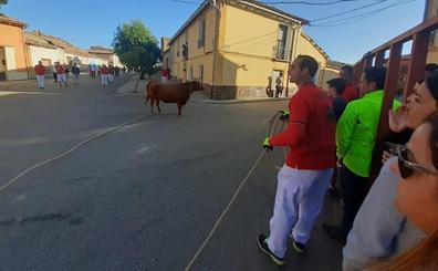 La vaca enmaromada de Villafrechós congrega a cientos de aficionados