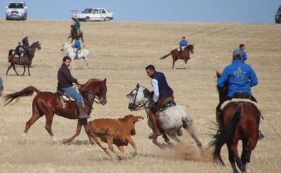 Gran participación en los festejos taurinos por el campo de Rioseco y Villafrechós