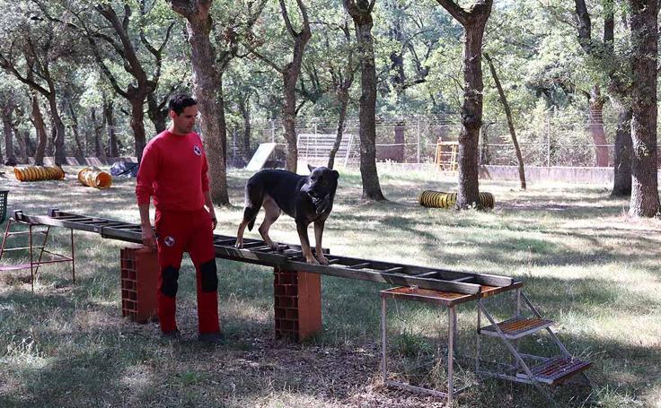 Una jornada de entrenamiento en la Unidad Canina de Salvamento del GREM Burgos