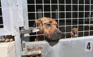 Castilla y León suma más de 2.000 perros de razas peligrosas en los últimos tres años