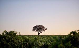 La Ruta del Vino de Rueda invita a vivir la vendimia con múltiples actividades para todas las edades